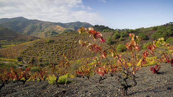 Paisatges del vi, a la DO Montsant. Foto: Jordi Brú.